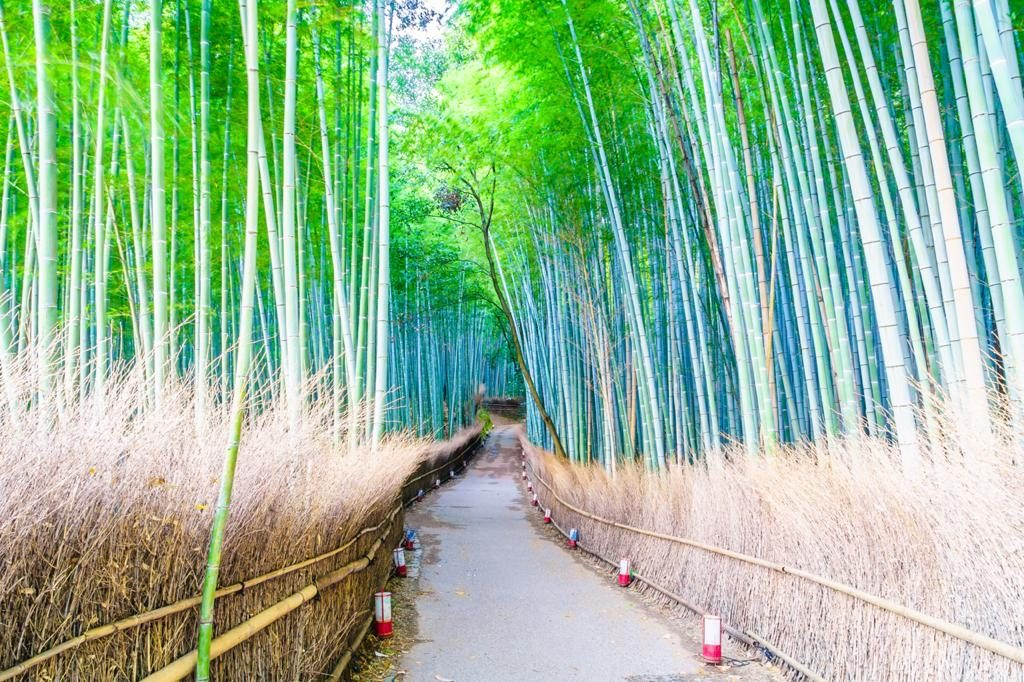 Arashiyama Bamboo Grove Kyoto