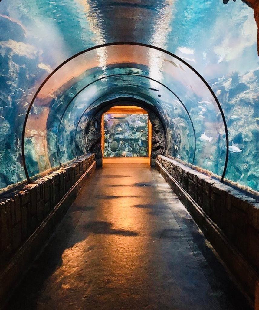 Shark Reef Aquarium - Mandalay Bay, Las Vegas