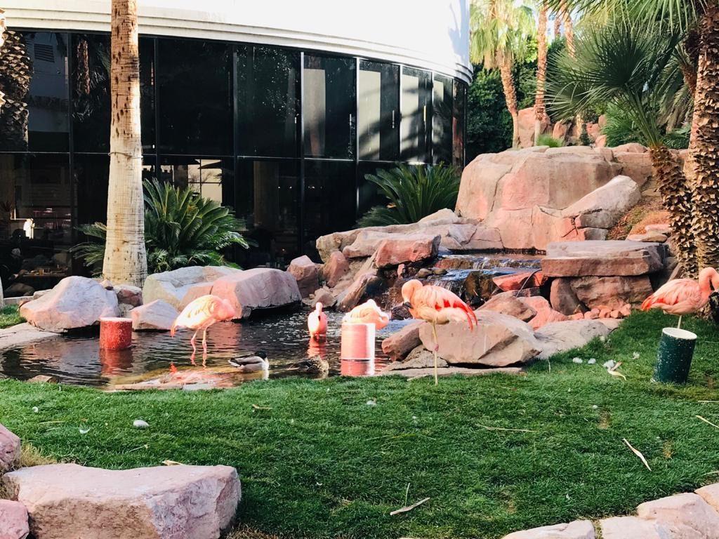 Wildlife Habitat at Flamingo Hotel - Las Vegas