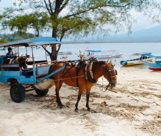 Ride on a Buggy/Carriage at Gili Islands