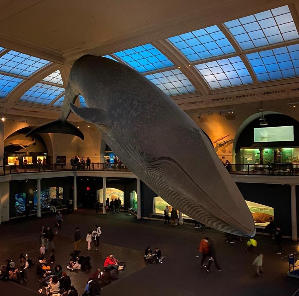Museum of Natural History, 10 must visit museums in Manhattan
